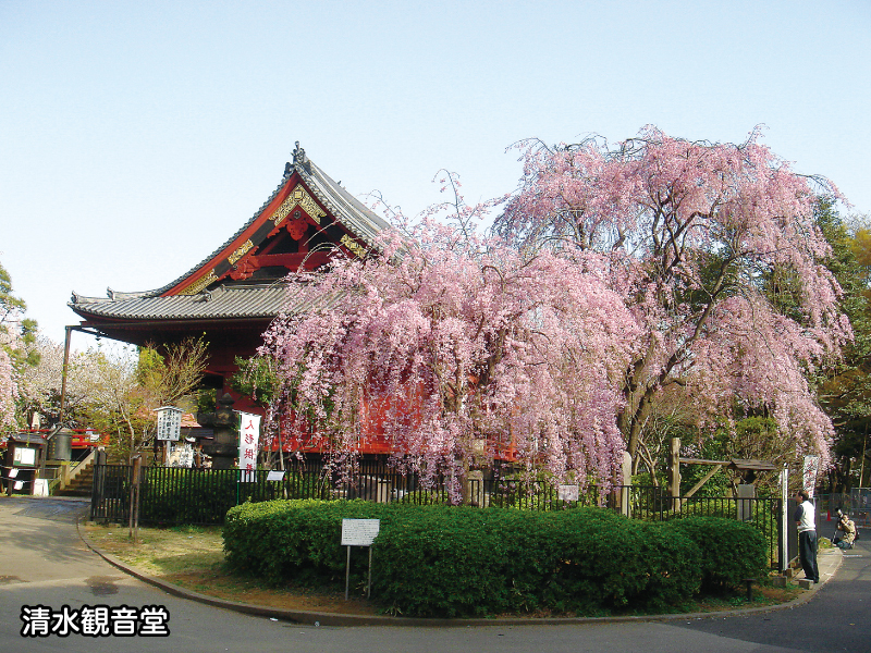 天台宗東叡山寛永寺墓地の画像4