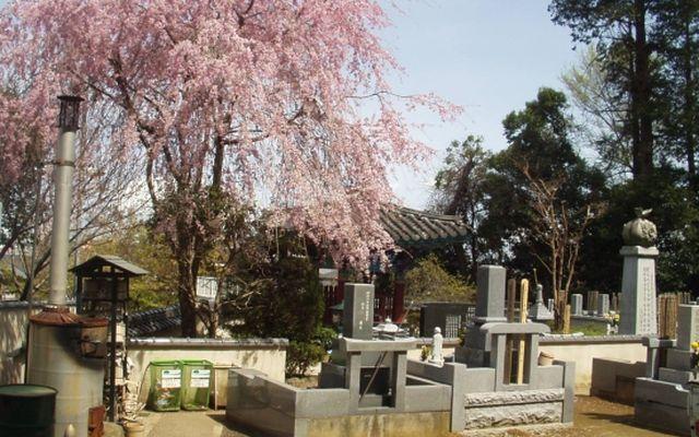 観音寺霊園の画像4