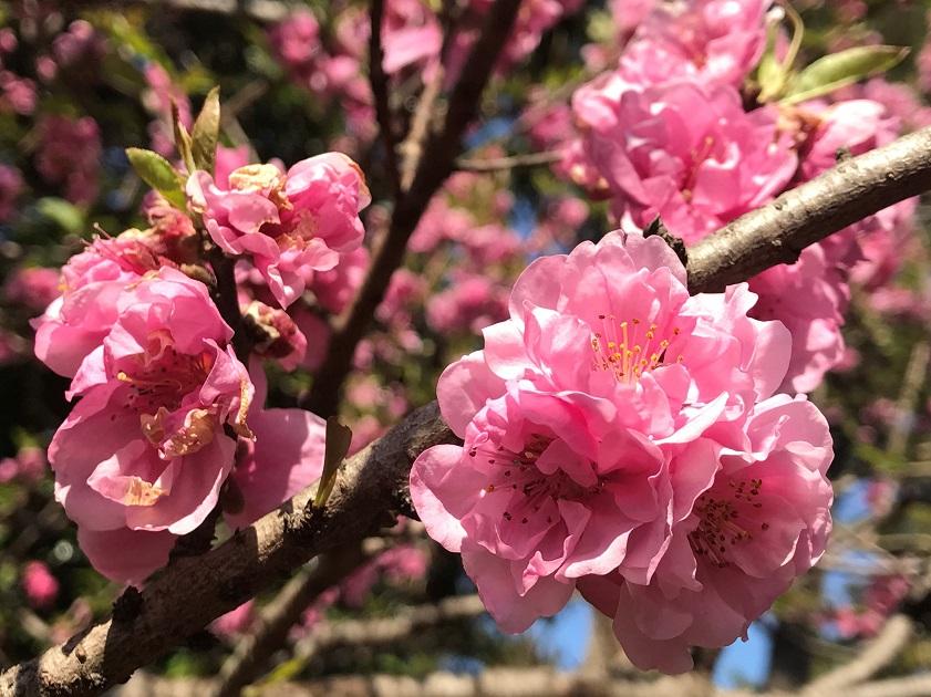 松戸庭苑の画像4