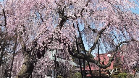 櫻乃丘聖地霊園の画像1