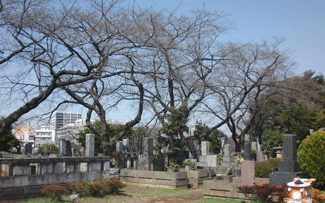 都立 染井霊園の画像2