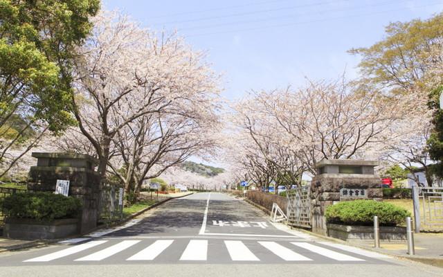 鎌倉霊園の画像2
