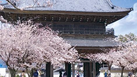 浄土宗大本山 光明寺の画像2