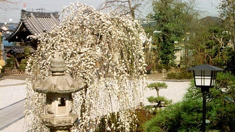 本長寺の画像2