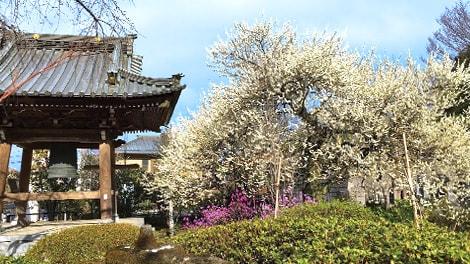 臥龍山 雲松院の画像2