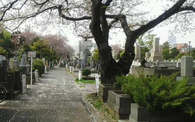 都立 染井霊園の画像5