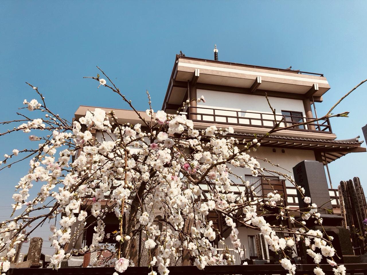 大覚寺 のうこつぼの画像5
