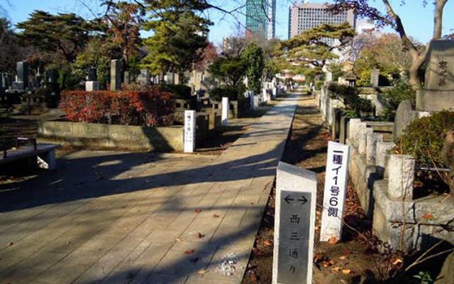 都立 青山霊園の画像4