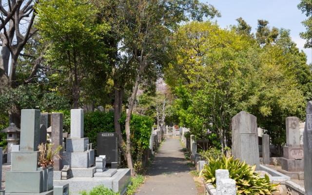 都立 谷中霊園の画像3
