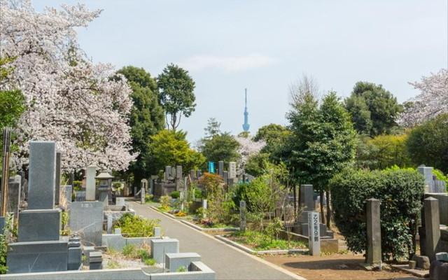 都立 谷中霊園の画像5