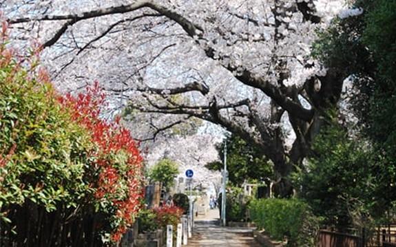 都立 染井霊園の画像6