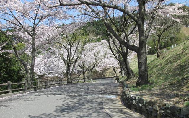 新宮霊園の画像3