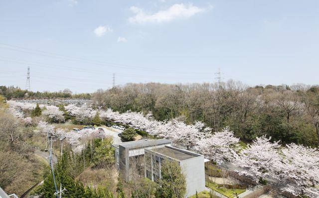 東京多摩霊園の画像6