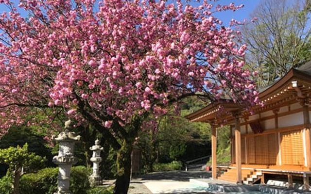プレミアム愛川の里 樹木葬墓地の画像2
